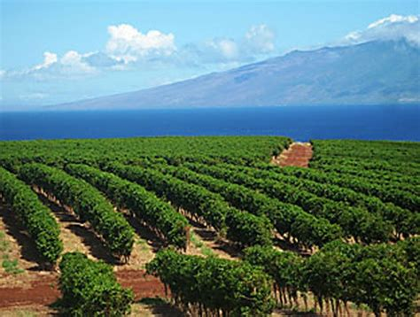 Kaanapali Coffee Farms On Our West Maui Coffee Tour Chemex Automatic Coffee Maker Bialetti Accessories Italian Machine Company Best Organic Instant Uk Rental Adalah Tips Pot Electric
