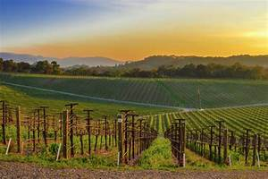 An Armchair Traveler 39 S Guide To Napa Valley Wine Country