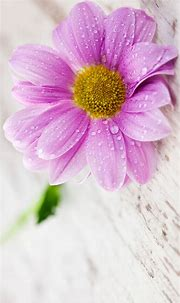 Flower Wallpapers for Mobile Phones with 1440×2560 and 5 ...