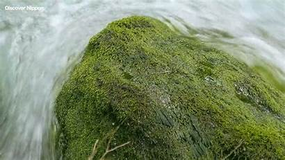 Loop Rock Moss Mossy Giphy Gifs Covered