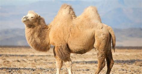 Mongolia's Most Threatened Mammals