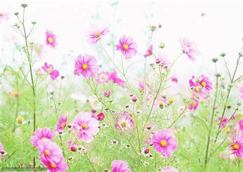 meilleurs pc de bureau fleurs de printemps 59 photos fonds d 39 écran