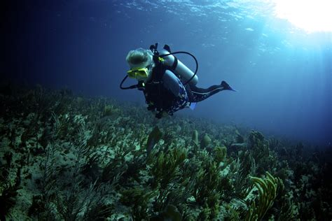 xtreme marine conservation dive hero belize xtreme gap