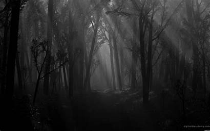 Shadows Dark Spooky Forest Scary Path Trees