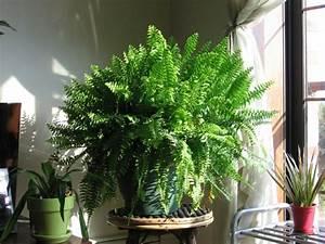 Pflegeleichte Zimmerpflanzen Mit Blüten : pflegeleichte zimmerpflanzen die die luft reinigen ~ Markanthonyermac.com Haus und Dekorationen