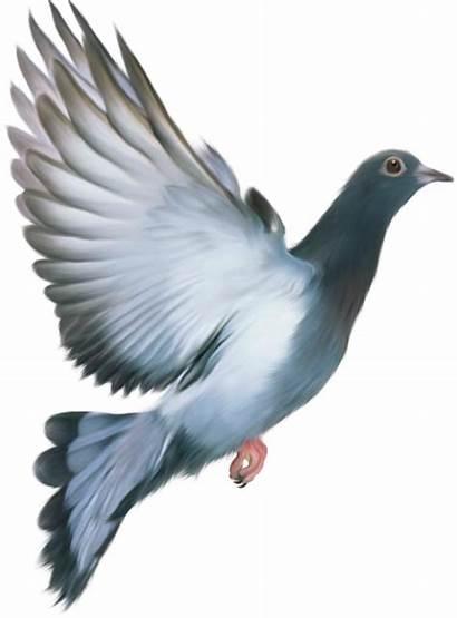 Burung Lukisan Gambar Related