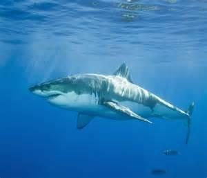 floor and decor smyrna white sharks curiousppl