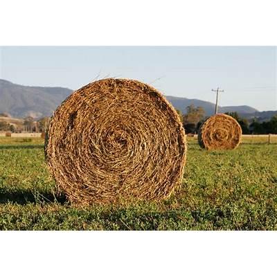 File:Round hay bale at dawn.jpg - Wikipedia