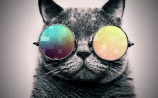 cool cat windows 10 hd wallpapers best collections