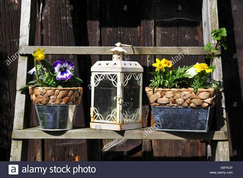 fruehling gemuese garten dekoration stockfoto bild