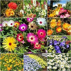 Blumen Im Sommer : sommer blumen wiese bl tenteppich blumen mischung blumenmeer saat samen auswahl ebay ~ Whattoseeinmadrid.com Haus und Dekorationen