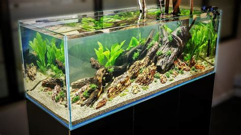 How To Aquascape An Aquarium by How To Aquascape A 125 Gal Nature Aquarium