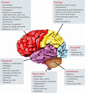 Stroke  Brain Regions  Functions  Frontal  Parietal