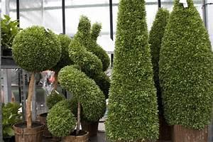 Serre Plantes Extrieur Beauraing Tropical