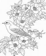 Mewarnai Coloring Adult Sketsa sketch template