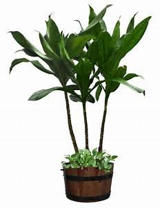 Pot De Fleur Transparent : tubes plante verte page 7 ~ Teatrodelosmanantiales.com Idées de Décoration
