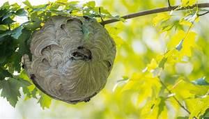 Wespen In Der Wohnung : test die wespennest attrappe hilft tats chlich gegen wespen business insider deutschland ~ Whattoseeinmadrid.com Haus und Dekorationen