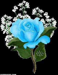 Sky Blue Rose Flower Greeting - JattDiSite.com