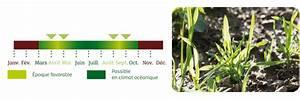 Quand Semer Du Gazon : 4 secrets pour bien vivre votre pelouse r ussir le gazon ~ Dailycaller-alerts.com Idées de Décoration