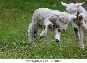 Image Gallery skipping lambs