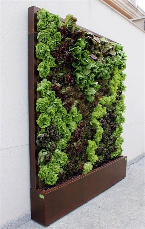 Vertical Garden Lettuce by Lettuce Wall Vertical And Edible It Aww I