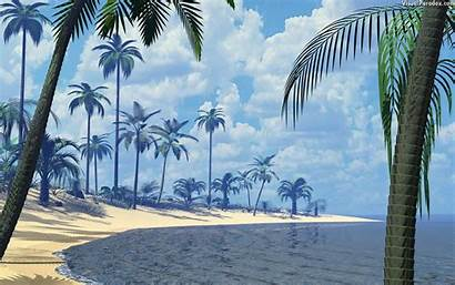 Trees Palm Beach Sea Coast Wallpapers Secluded