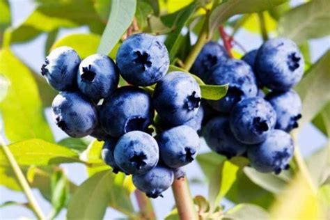 7 Easily Propagated Fruits For Transforming Your Backyard