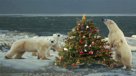 Polar Bear Christmas Wallpapers