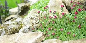 Blumen Für Steingarten : steingarten anlegen steingartengew chse winterharte steingartenpflanzen ~ Markanthonyermac.com Haus und Dekorationen