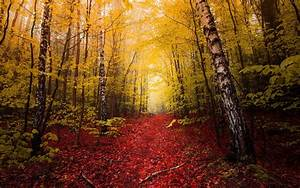 Nature, Landscape, Fall, Red, Leaves, Path, Yellow, Trees, Mist, Forest, Wallpapers, Hd, Desktop