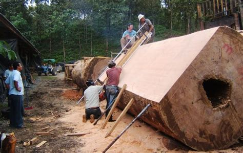 cutting wood slabs google search cool wood stuff