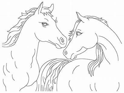 Gambar Mewarnai Kuda Coloring Horse Printable Sheet