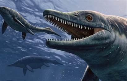 Ichthyosaurs Ichthyosaurus Prehistoric Sea Monster Extinct Species