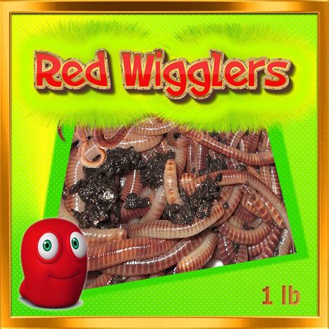 worms wigglers fishing bait worm composting healthy pound wiggler farm