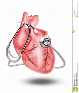 Healthy Heart With Stethoscope On White Background Use For ...