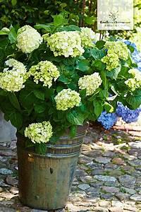 25 trendige endless summer hortensie ideen auf pinterest With französischer balkon mit ph wert messgerät garten