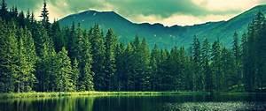 Mountain, Forest, Hd, Wallpaper, 4k, Ultra, Hd, Wide, Tv