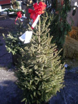 the only place in ann arbor to get your christmas tree