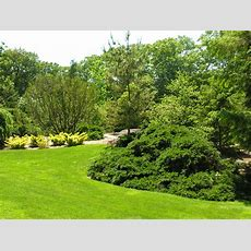 The New York Botanical Garden Iv Trees  Digging Ri