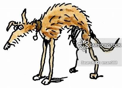 Dog Skinny Stray Dogs Cartoon Cartoons Funny