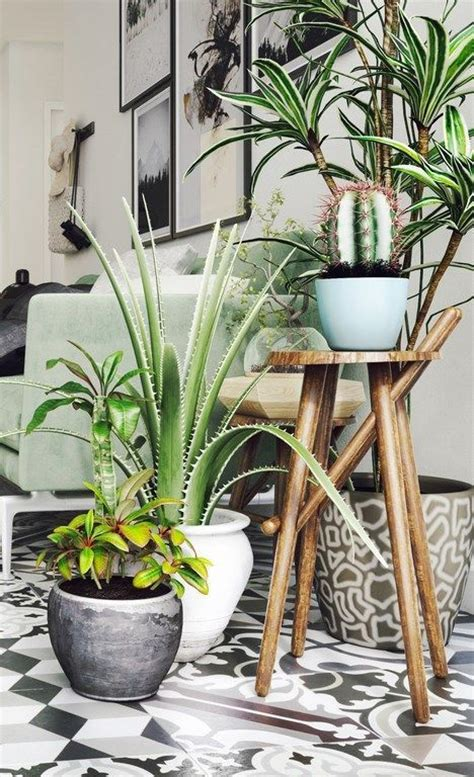 25 best ideas about indoor plant decor on plant decor botanical decor and plants