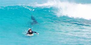 Surferu002639s Close Encounter With Shark Captured In Series Of