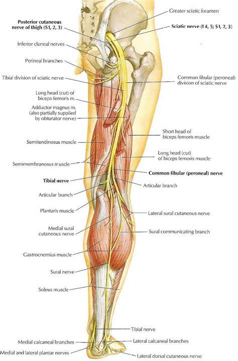 Isjias - Symptomer og behandling