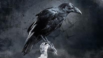 Crow Raven Bird Digital Birds Background Wallpapers