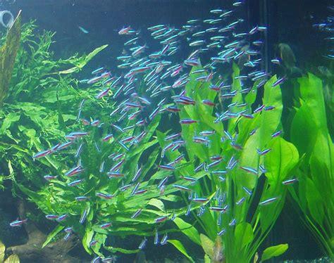 n 233 ons aquariums de v 233 ronique
