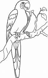 Parrot Coloring Lovely Macaw Pages sketch template