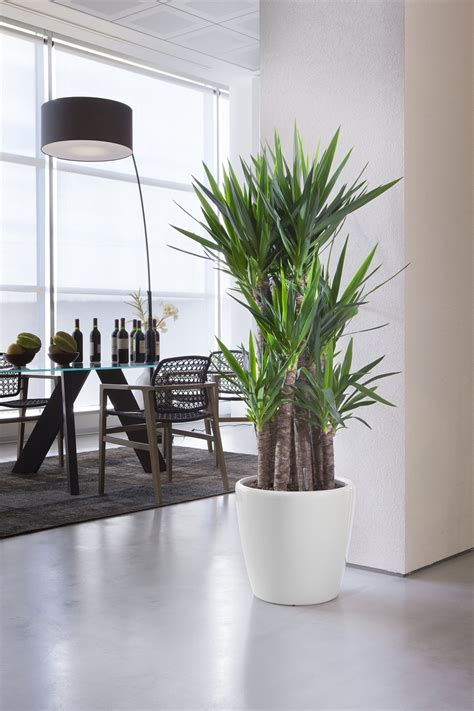Ampio catalogo di piante da interno e d'appartamento! Piante da appartamento, il verde in casa