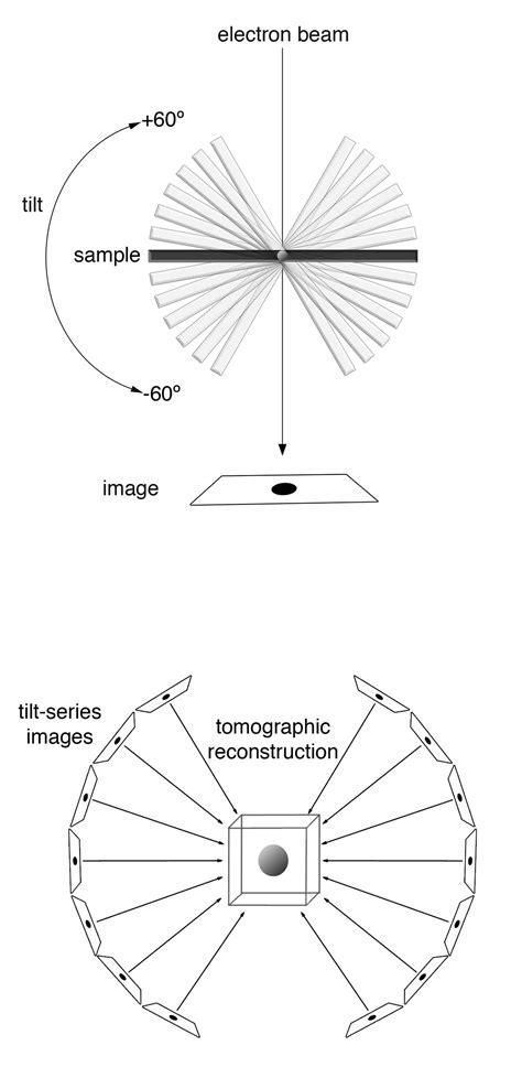 electron cryotomography wikipedia