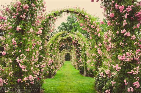roses gardens elizabeth park rose garden in hartford connecticut