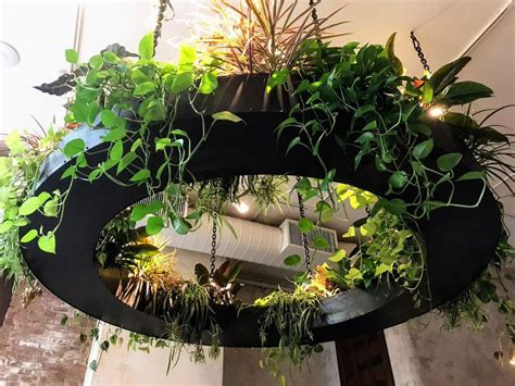 peggy li   images hanging plants plants